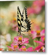 On The Top - Swallowtail Butterfly Metal Print
