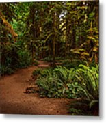 On The Trail To .... Metal Print
