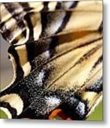On The Wing Of An Angel Metal Print