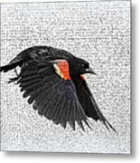 On The Wing - Red-winged Blackbird Metal Print
