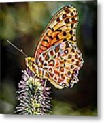 On The Wings Of A Butterfly... Metal Print
