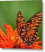 On The Wings Of A Butterfly Metal Print