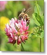 On Top Of The Blossom Metal Print