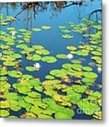 Once Upon A Lily Pad Metal Print