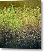 Once Upon An Egret's Home Metal Print