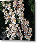 Oncidium Twinkle Fragrance Fantasy Metal Print