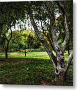 One Autumn Day - Central Park - Nyc Metal Print