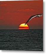 One Black Skimmers At Sunset Metal Print