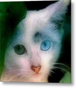 One Blue One Green Cat In New Olreans Metal Print