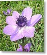 One Delicate Pale Lilac Anemone Coronaria Wild Flower Metal Print
