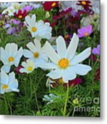 One Flower Stands Out Metal Print