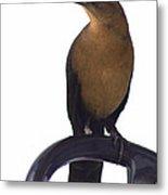 One Foot Bird Metal Print by DerekTXFactor Creative