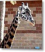 One Giraffe Metal Print