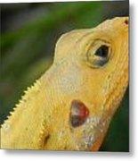 One Happy Lizard Metal Print