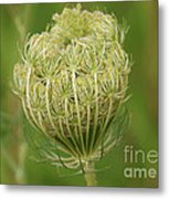 One Last Huddle Before The Bloom Metal Print