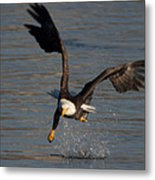 One Legged Grab Metal Print by Glenn Lawrence