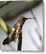 One Out Of Place - Hummingbird Metal Print