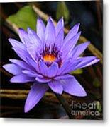 One Purple Water Lily Metal Print by Carol Groenen