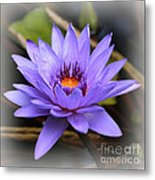 One Purple Water Lily With Vignette Metal Print