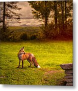 One Red Fox Metal Print