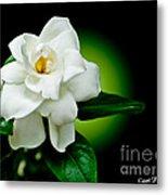 One Sensual White Flower Metal Print by Carol F Austin