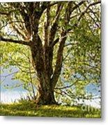 One Spring Tree Metal Print