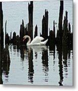 One Swan Metal Print