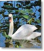 One Swan In The Lilies Metal Print