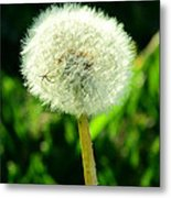 One Thousand Wishes Metal Print by Andrea Dale