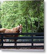 One Very Pretty Hilton Head Island Horse Metal Print