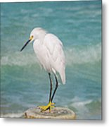 One With Nature - Snowy Egret Metal Print