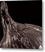 Onion Skin Metal Print by Bob Orsillo