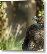 Only An Eagle Can Be As Sharp As An Eagle Metal Print