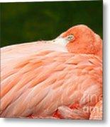 Flamingo With An Open Eye Metal Print