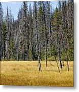 Open Meadow Glacier National Park Metal Print