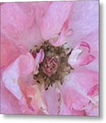 Open Pink Rose Metal Print