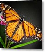 Open Wings Monarch Butterfly Metal Print