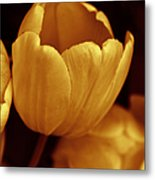 Opening Tulip Flower Golden Monochrome Metal Print