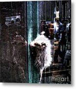 Opossum In The City Metal Print