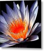 Orange And Blue Lily...   # Metal Print