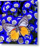 Orange And Gray Butterfly Metal Print