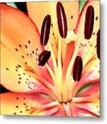 Orange And Pink Flower Metal Print