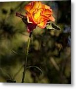 Orange And Yellow Rose Metal Print