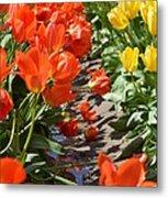Orange And Yellow Tulips Metal Print
