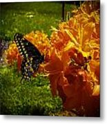 Orange Azalea Metal Print