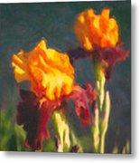 Orange Bearded Irises Metal Print