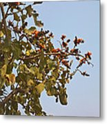 Orange Blossom Of Kesuda Blue Sky Metal Print