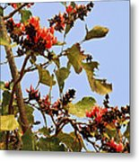 Orange Blossom Of The Kesuda Metal Print