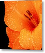 Orange Blossom Special Metal Print
