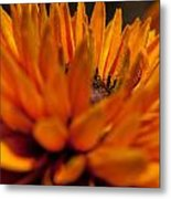 Orange Burst Metal Print
